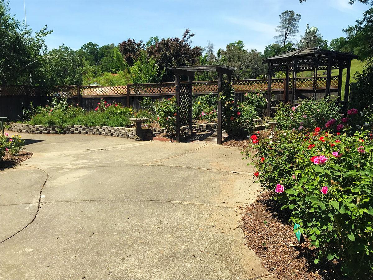 Outside Patio & Rose Garden